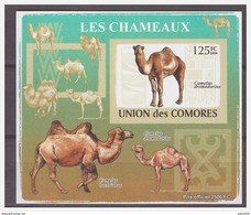 0196 Comores 2009 Kameel Camel S/S MNH Imperf - Autres