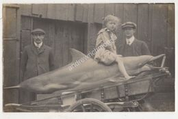Cornwall Girl Sitting On Caught Dolphin Vintage RP Postcard 699b - Angleterre