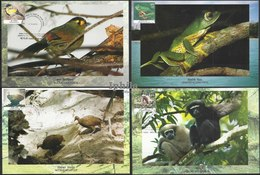 MAX CARDS Endemic Species Bugun Liocichla Nicobar Megapode Fowl Primate Gibbon Frog Bird Birds Vogel Oiseaux Monkey - Birds