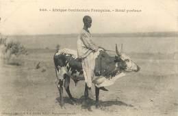 Afrique Occidentale Française - Boeuf Porteur - Fortier  Dakar - Senegal
