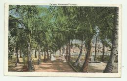 CUBA - COCOANUT GROVE VIAGGIATA FP - Cartes Postales