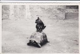 PHOTO De Famille  Non  Située Dans Le Jardin Chat + Tortue ---voir 2 Scans - Photographs