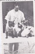 PHOTO De Famille  Non  Située Dans Le Jardin 4 Chats---voir 2 Scans - Photographs
