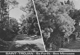 SAINT TROJAN  Sa Foret Ses Mimosas  Carte En Très Bon état - Ile D'Oléron