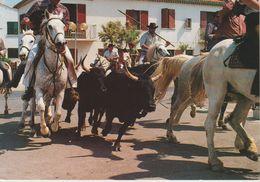 (FRA942) CAMARGUE. UNE ABRIVADO - France