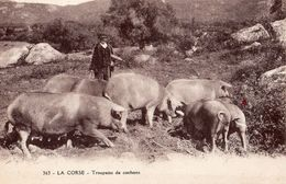 363   LA CORSE    TROUPEAU DE COCHONS    CARTE ANIMEE - Corse