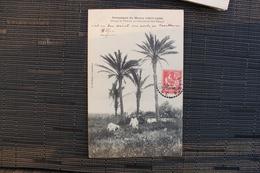 TT - MAROC -campagne Du Maroc - Groupe De Palmiers Au Cimetière De Sidi Bélioud - Timbre Surchargé - Casablanca