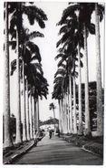 VIEWS OF GHANA - ABURI ROYAL PALMS / THEMATIC STAMP-FLOWERS - 1966 - Ghana - Gold Coast