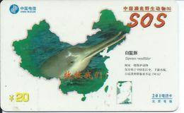 Dauphin  Animal Télécarte Phonecard Karte (S.536) - Chine