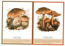 DUE CARTOLINE BOLETUS EDULIS  CORTINARIUS ORELLANUS FUNGHI MUSHROOMS CHAMPIGNONS  PILZ SETAS - Funghi