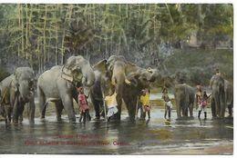 CEYLON 1929 ELEPHANTS No.34 - Posted To Switzerland 1 Stamp USED - Elefantes