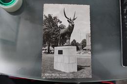 TT - PAYS BAS - ARNHEM HERT VAN POMPON - Arnhem
