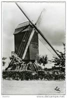 OHAIN (Brabant Wallon) - Molen/moulin - Le Vieux Moulin à Vent De Gaillemarde (disparu) - Lasne