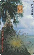 Madagaskar Phonecard Palm Tree - Madagascar