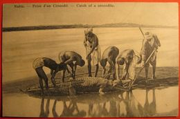 Catch Of A Crocodile At Nubie River Nile, EGYPT - Egypte