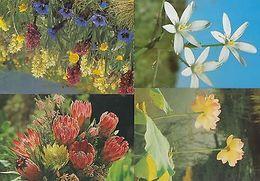 Star Of Bethlehem Egypt Nelumbo Lotus Alps African Proteas 4x Flower Postcard S - Postcards