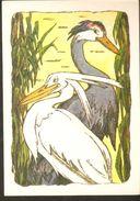 K. Russia USSR Soviet Postcard Russian Tales Birds Crane And Heron Fairy Tale Story By Alekseev Artist - Fairy Tales, Popular Stories & Legends