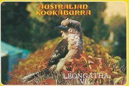 Australian Australia Kookaburra At Leongatha Victoria Rare Bird Postcard - Animals