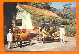 MADEIRA POSTCARD UK ISSUE PORTUGAL FUNCHAL OXEN DRAWN CART 50s - Postcards