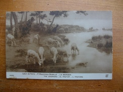 Berger Et Ses Moutons , Salon De Paris , A.rousseau-decelle - Elevage
