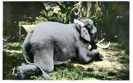 N°54873 -cpsm Vietnam- Ngé An Lo Ham - éléphant- - Éléphants