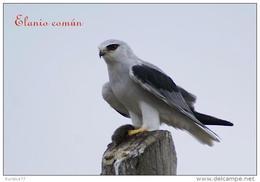 Aves Rapaces De La Peninsula Iberica (birds Of Prey) Postcard Collection  - Size:15x10 Cm.aprox. - Pájaros