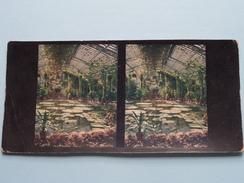 Gewächshäuser Des Palmengartens In FRANKFURT( Serie 19 N° 132) Stereo Photo / Chromoplast ( Voir Photo Pour Detail ) ! - Photos Stéréoscopiques