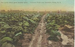 Tobacco Field Near Southern Pines. N. C.    S-3853 - Tabaco