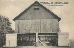 Tobacco  Strung On Laths. Connecticut.    S-3854 - Tabaco