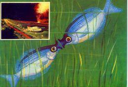 Pesci - Baciuccone - Gourami - Formato Grande Viaggiata – Ar - Pesci E Crostacei