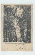 """Strasbourg (67)  : L'arbre Dit """"Saint-Arbogast-Elcje"""" Im Hagebauer Forest En 1900 (animé) PF. - Strasbourg"""