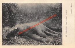 Elephant Tué - Haut Chari - Centrafricaine (République)