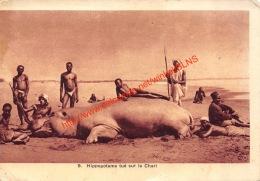 Hippopotame Tué Sur Le Chari - Zentralafrik. Republik