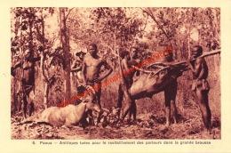 Paoua - Antilopes Tuées Pour Le Ravitaillement Des Porteurs Dans La Grande Brousse - Centrafricaine (République)