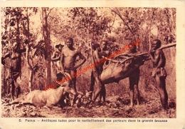 Paoua - Antilopes Tuées Pour Le Ravitaillement Des Porteurs Dans La Grande Brousse - Centraal-Afrikaanse Republiek