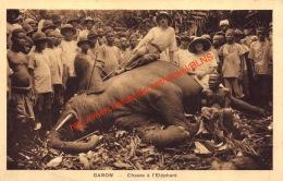 Chasse à L'Eléphant - Gabon - Gabon