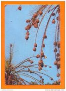 GUINÉ BISSAU GUINEA 1970 YEARS AFRICA AFRIKA AFRIQUE BIRDS BIRD CATCHU CALDEIRÃO VOANDO EN VOL FLY POSTCARD - Guinea-Bissau