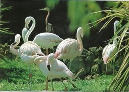 MARILAND COSTA BRAVA PAJARO FLAMENCO - Pájaros