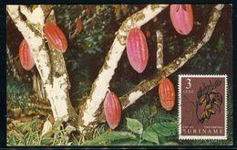 Surinam - Carte Maximum 1961 - Fruits - Surinam ... - 1975