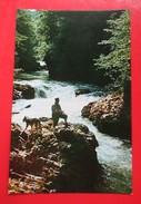 D2-Postcard-Vintgar Na Skalci,Fisherman And Dog,Waterfall - Slovenia
