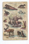 Vp 107 Image Animaux (Faune Artique) Offert Aux Enfants Sages Par L' Express Teinture Produit à Base De Savon - Vieux Papiers