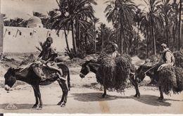 ALGERIE -- SCENES Et TYPES -- Retour à L' Oasis + Anes Et Dattes - Scènes & Types
