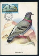 Sharjah - Carte Maximum 1966 - Oiseaux - Schardscha
