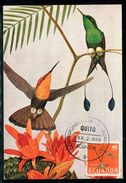 Equateur - Carte Maximum 1958 - Oiseaux - Equateur