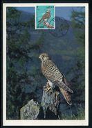 Abu Dhabi - Carte Maximum 1966 - Oiseaux - Abu Dhabi