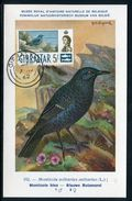 Gibraltar - Carte Maximum 1962 - Oiseaux - Gibraltar