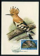 Sharjah - Carte Maximum 1965 - Oiseaux - Schardscha