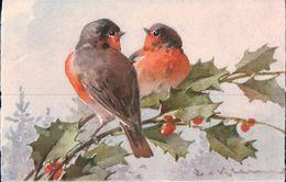 Klein Catharina, Oiseaux Litho (125) - Klein, Catharina