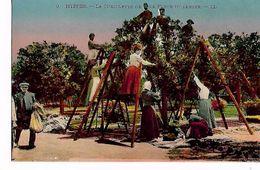 La  Cueillette  De  La  Fleur  D, Oranges - Hyeres