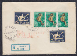 Yugoslavia 1956 Fauna And Melbourne Olympic Games, Registered Letter Sent From Beograd To Novi Sad - 1945-1992 Socialist Federal Republic Of Yugoslavia